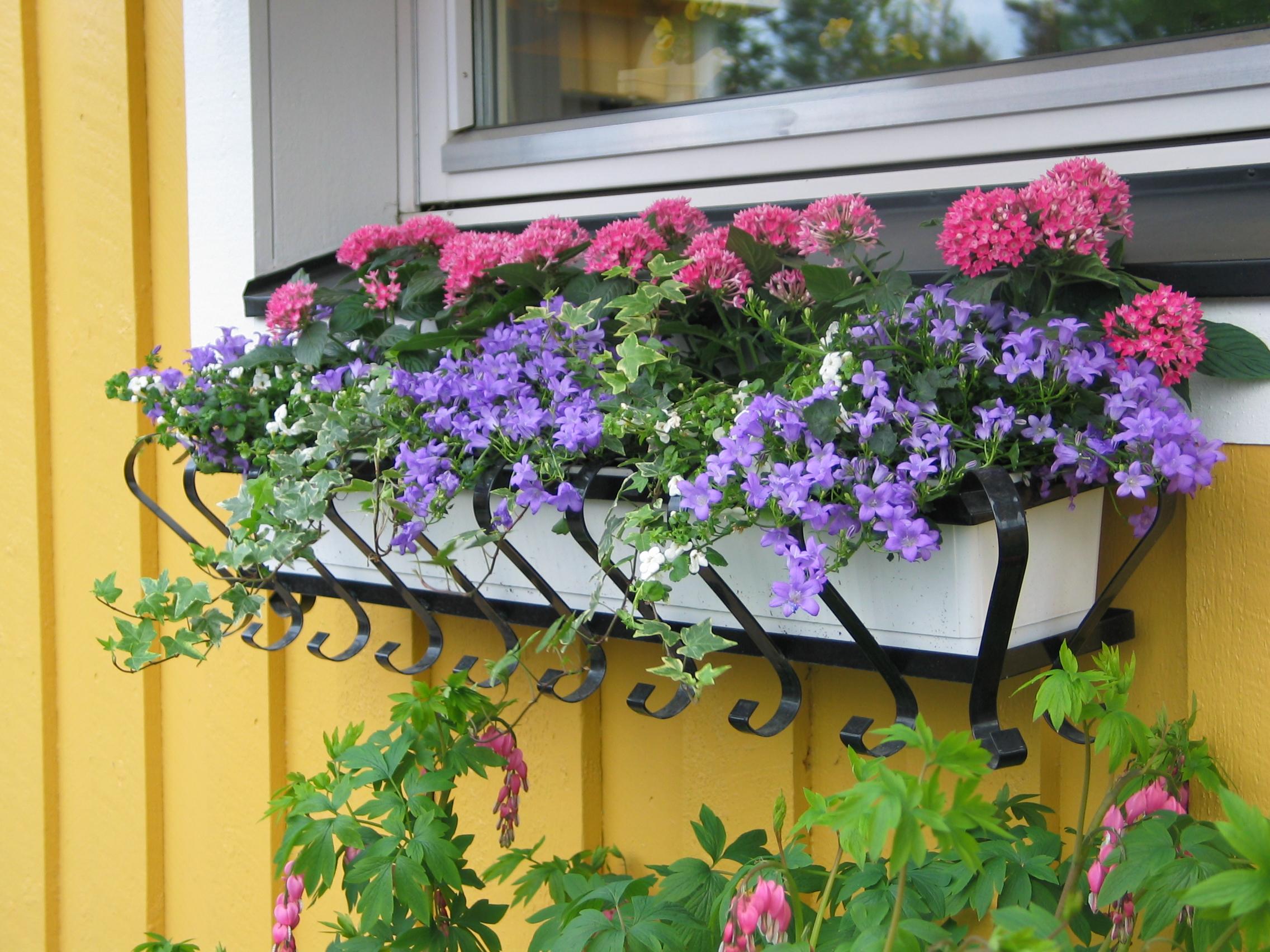 blommor till balkonglådor